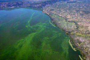 Vue du lac Klamath en Oregon (USA) ou pousse naturellement l'Aphanizomenon Flos Aquae (AFA) importée en UE grâce à Jacques Prunier fondateur du groupe SynerJ-Health.